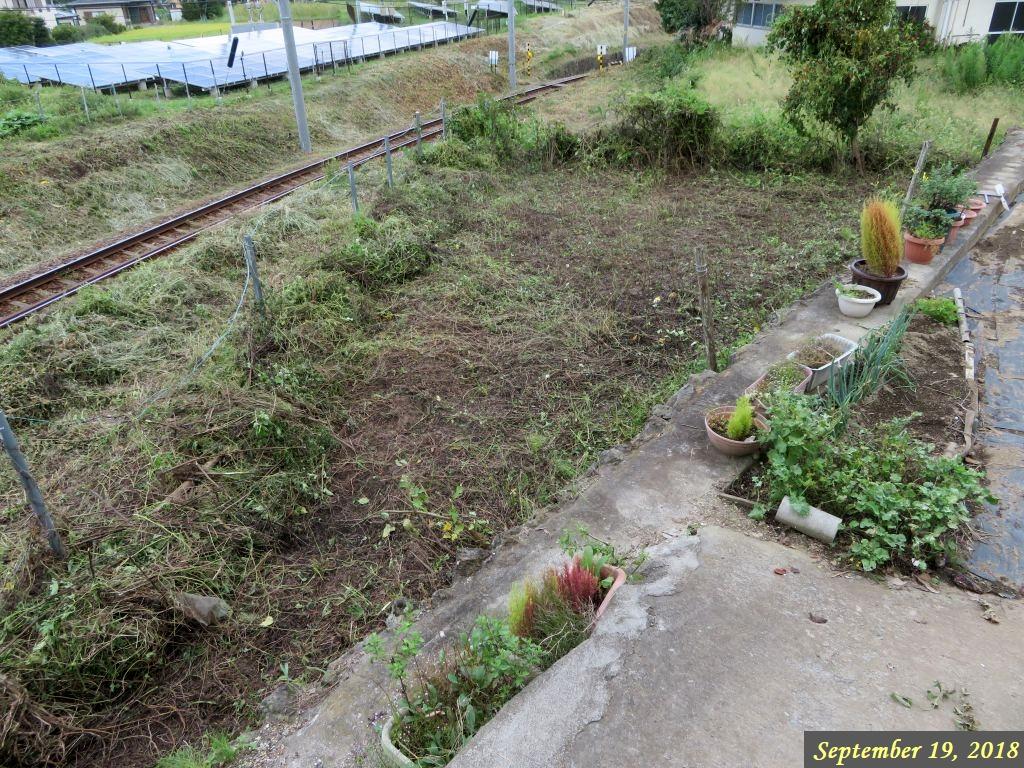 画像6(空き地の草刈り)
