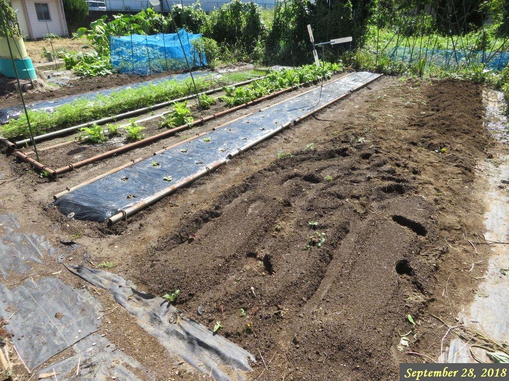 画像8(サツマイモ収穫後の畑)