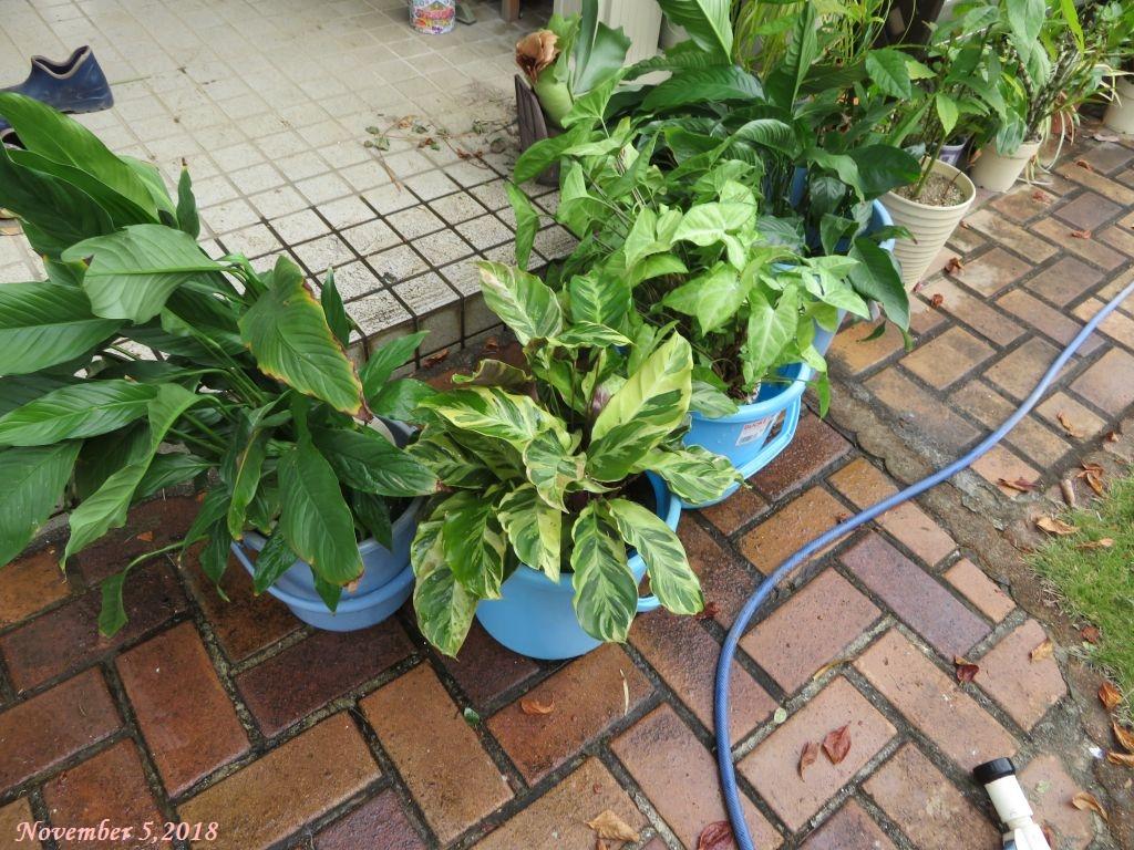 画像4(観葉植物)