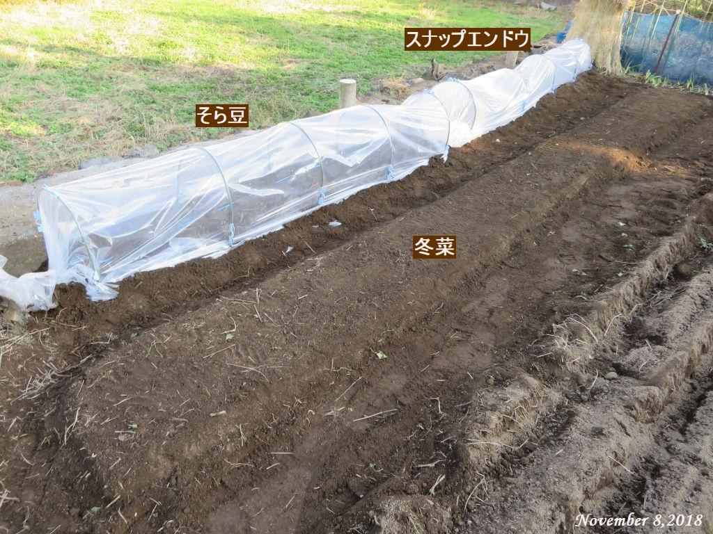 画像10(スナップエンドウ・そら豆・冬菜)