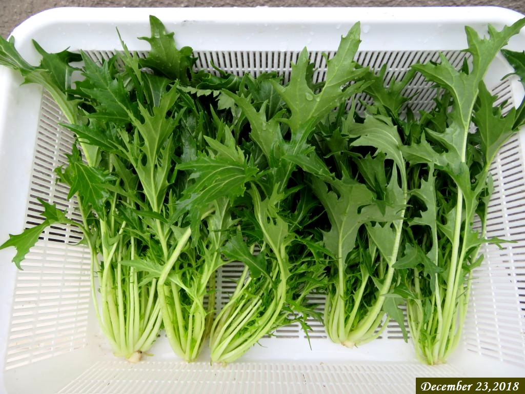 画像6(水菜)