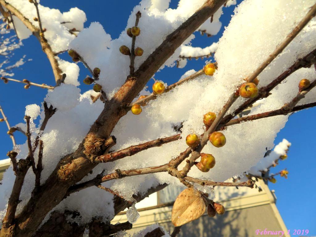 画像5(今朝の雪)