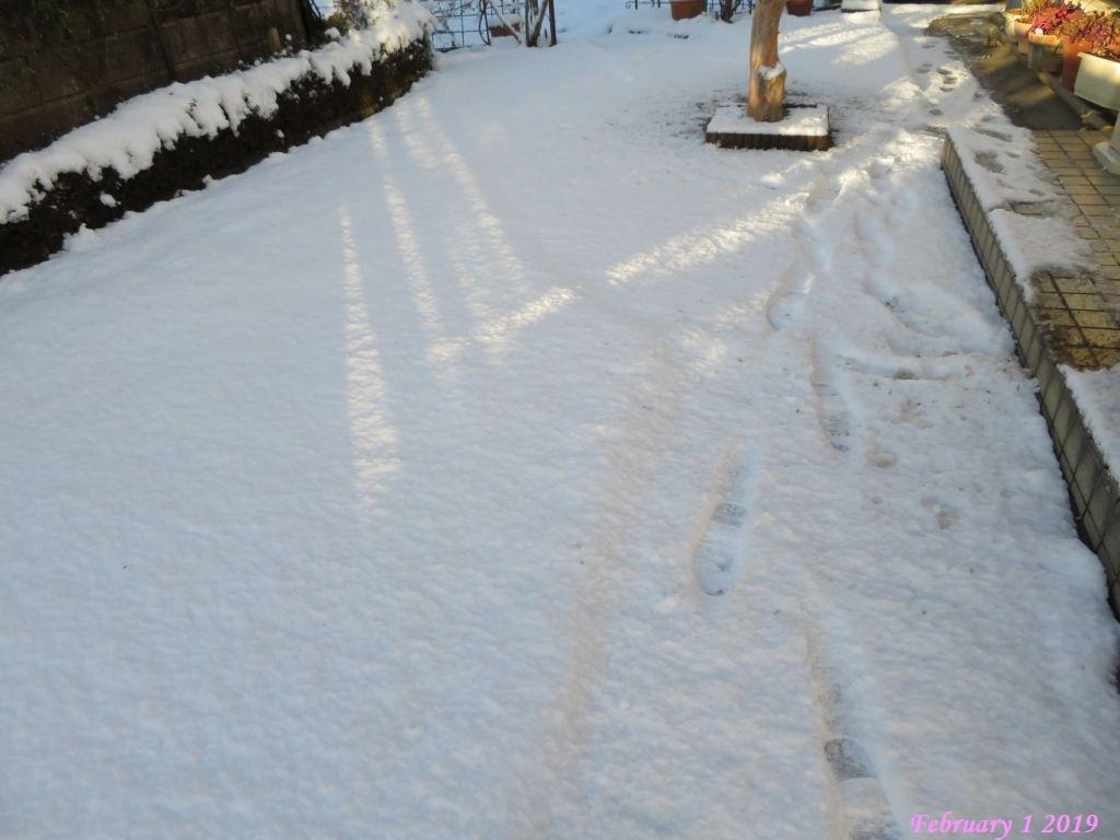 画像6(庭の雪)