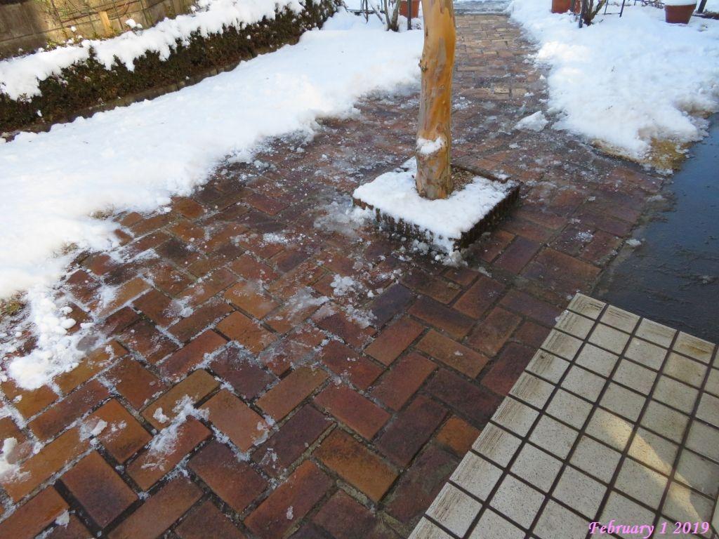 画像7(雪かき後の庭)