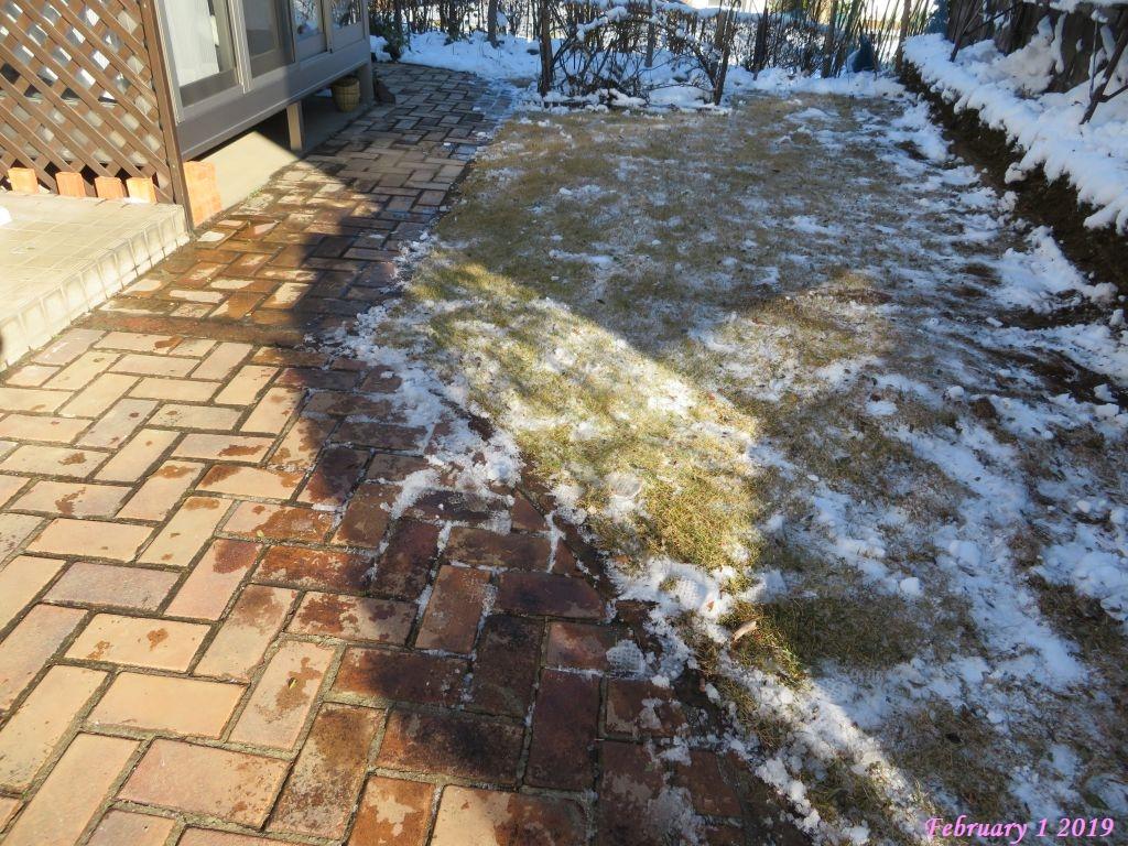 画像8(雪かき後の庭)