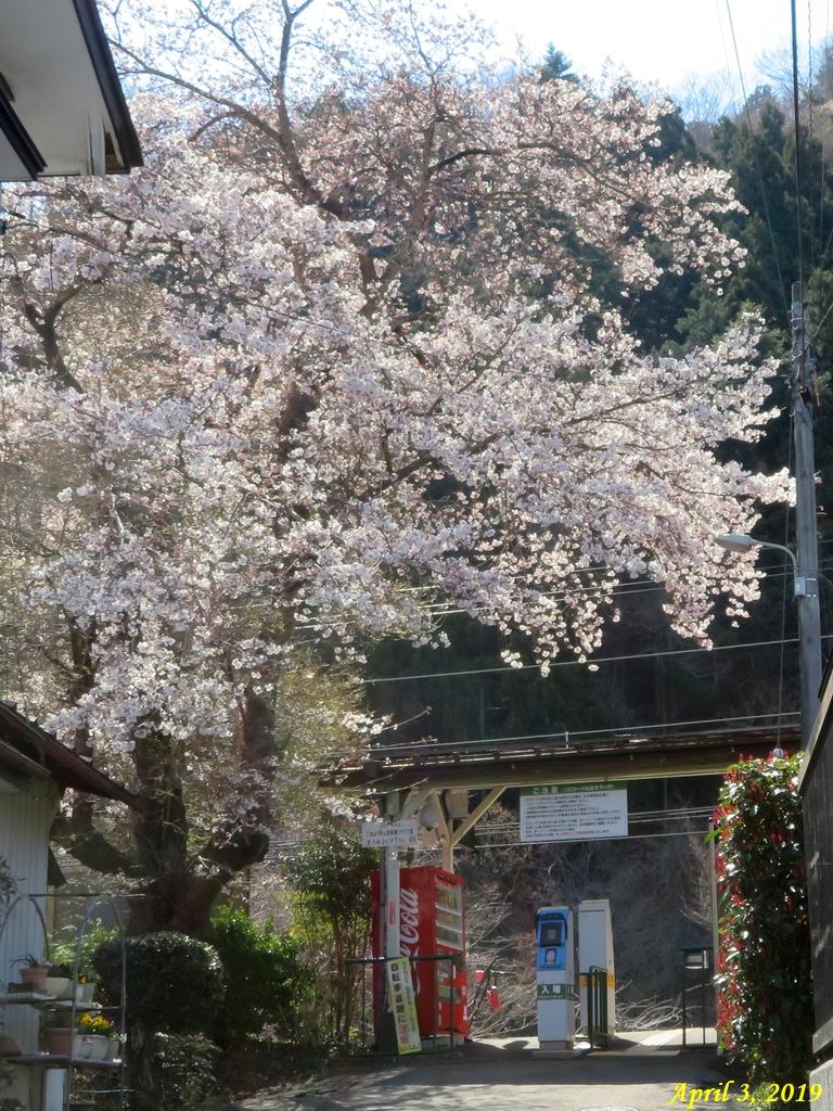 画像2(桜)