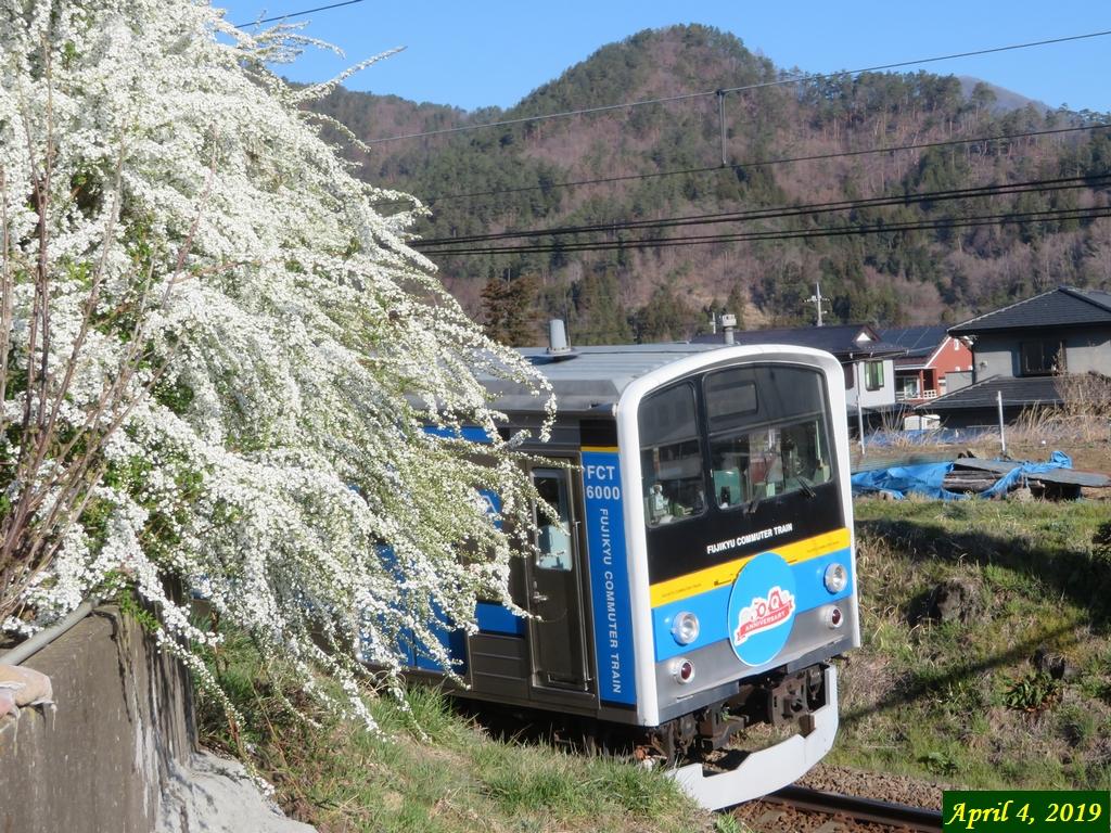 画像2(電車とユキヤナギ)