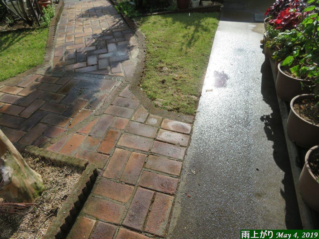 画像6(雨上がりの芝生)