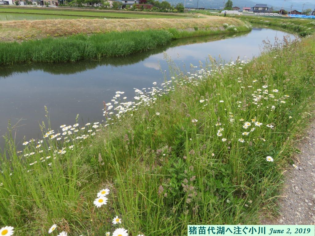 画像5(猪苗代湖に注ぐ小川)
