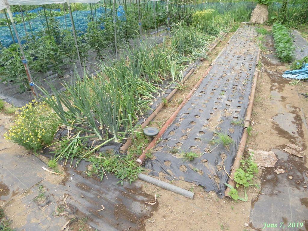 画像16(玉ねぎ収穫後の畑)