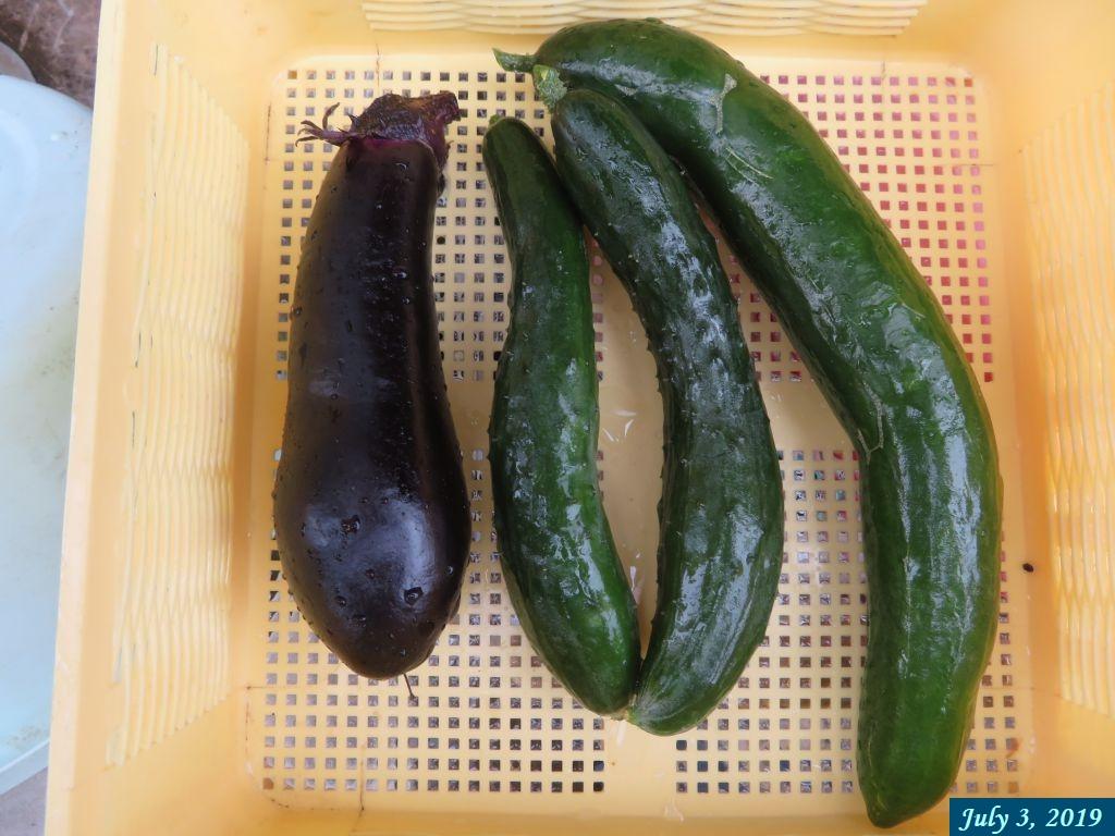 画像8(収穫したキュウリと茄子)