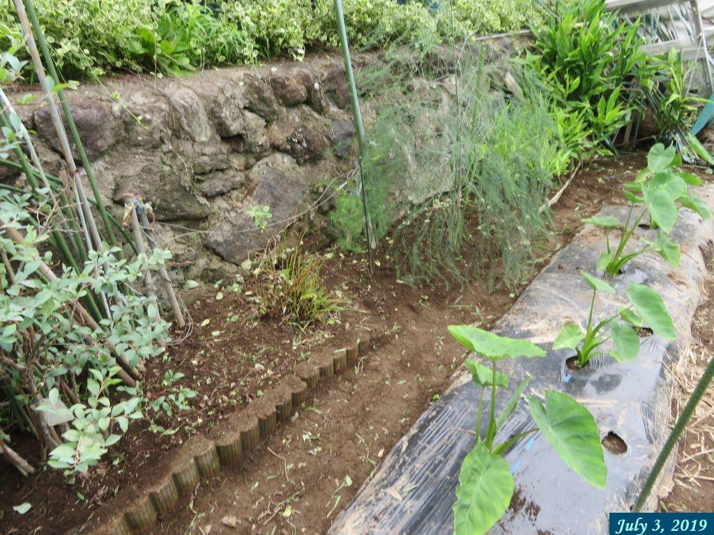画像11(草取り後の石垣の下)