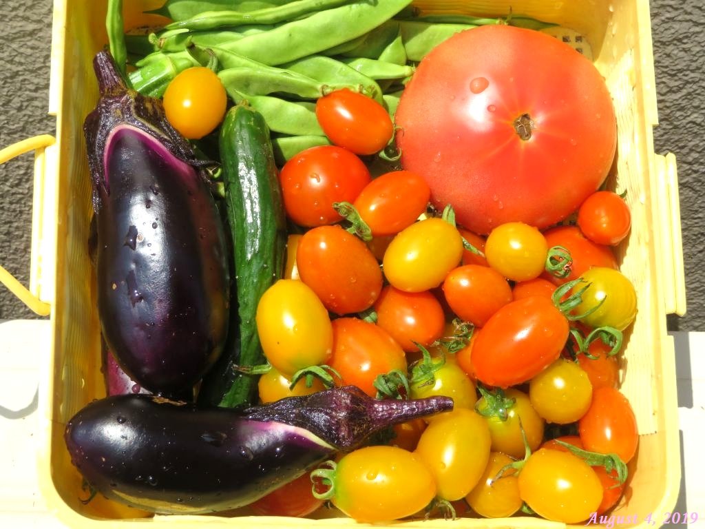 画像18(本日の収穫野菜)