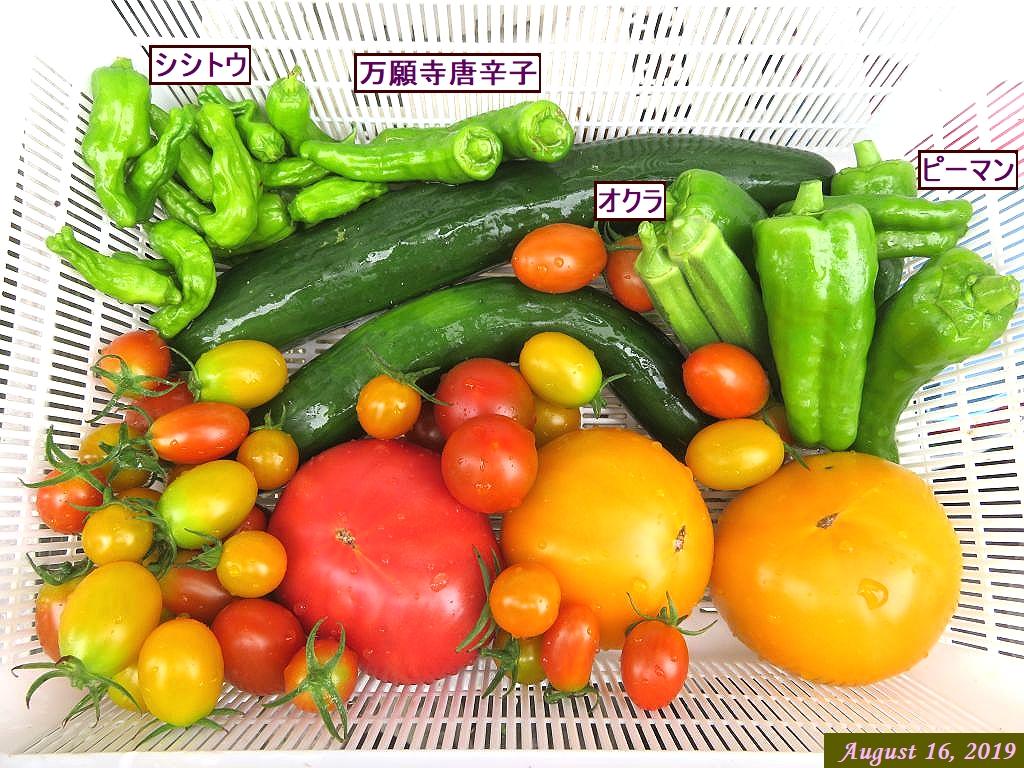 画像12(収穫野菜)