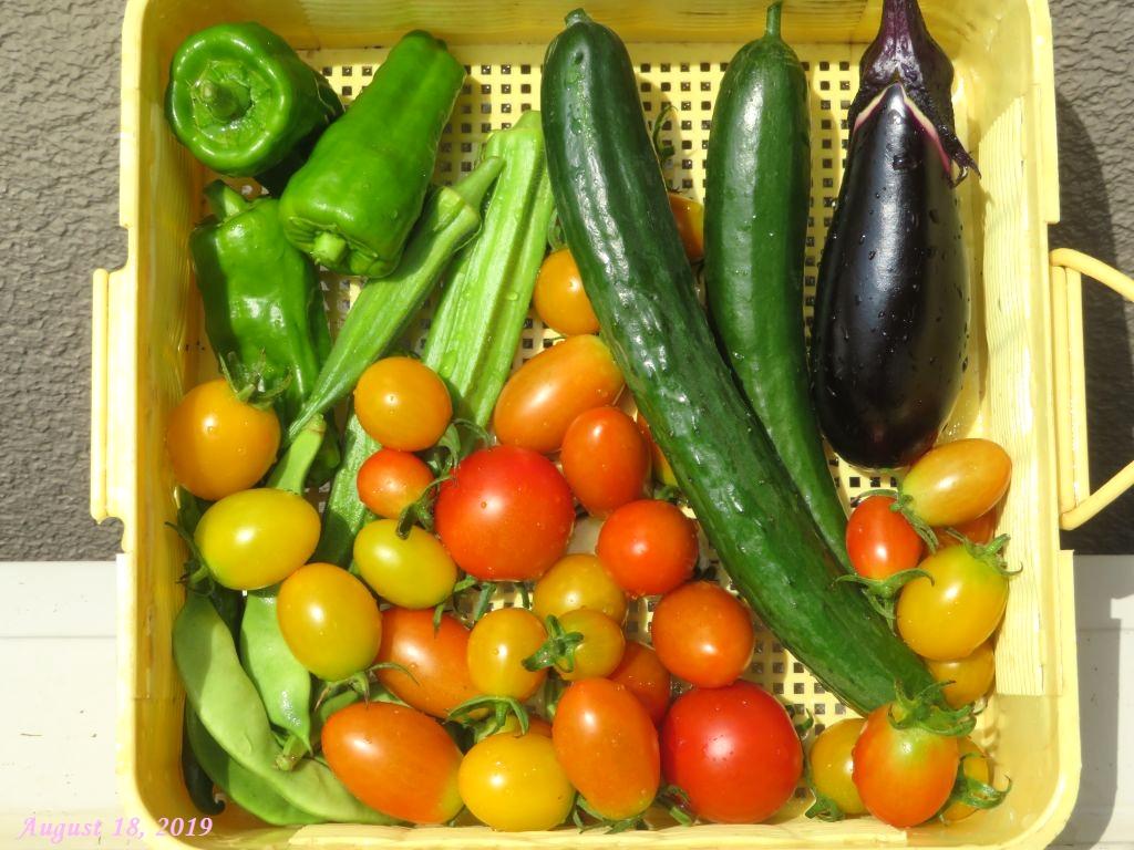 画像5(収穫野菜)