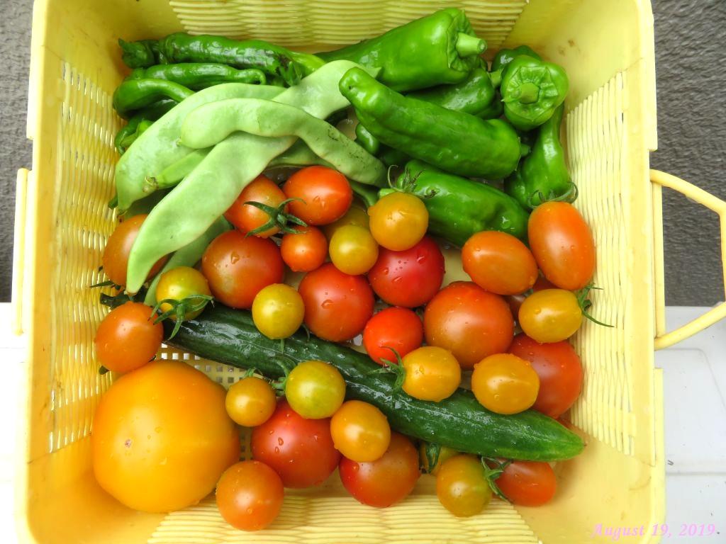 画像6(収穫野菜)