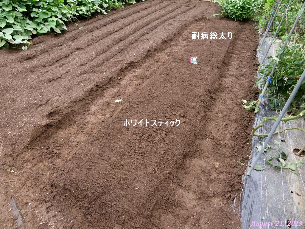 画像10(大根の種まき)