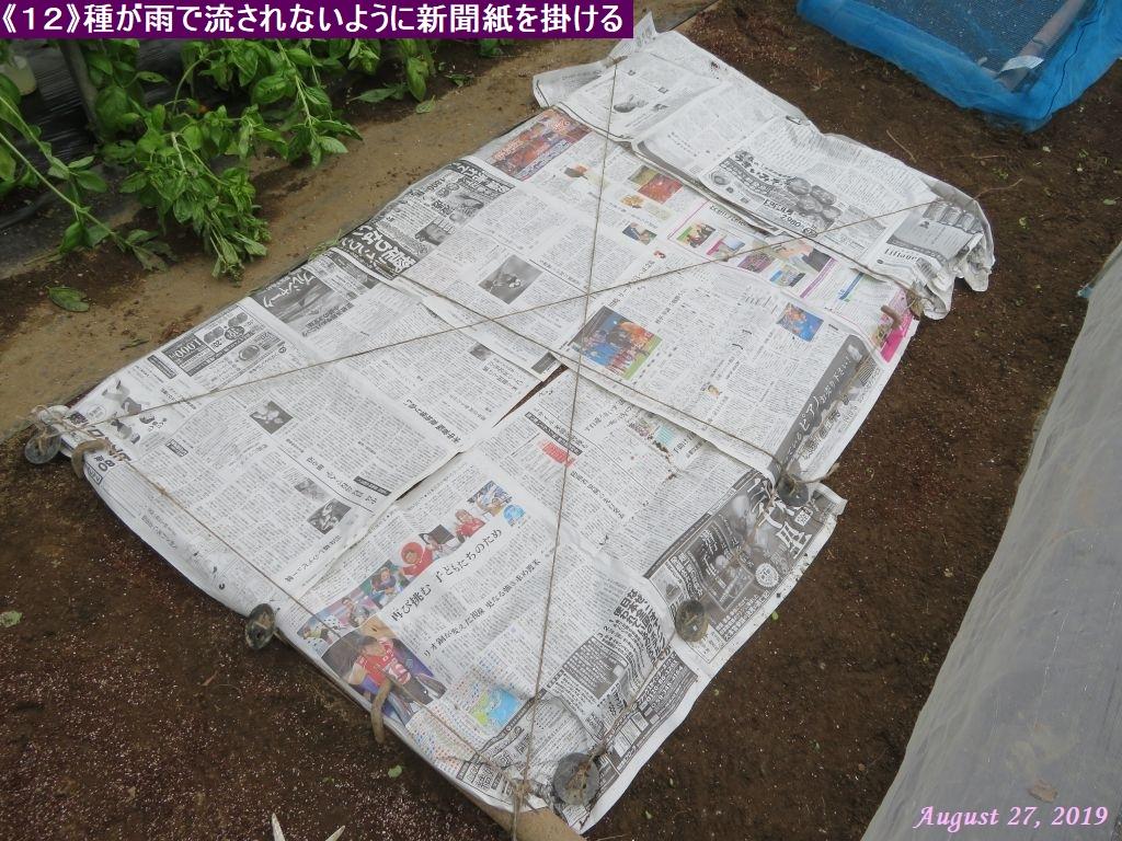 画像13(新聞紙を掛ける)
