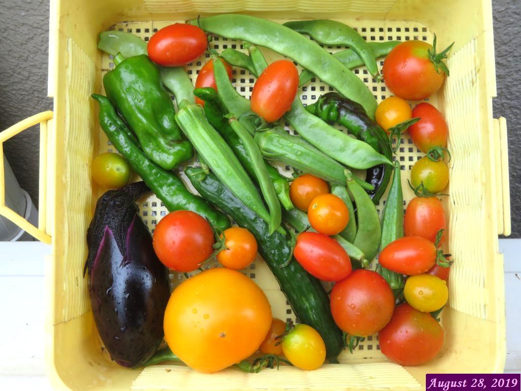 画像1(収穫野菜)