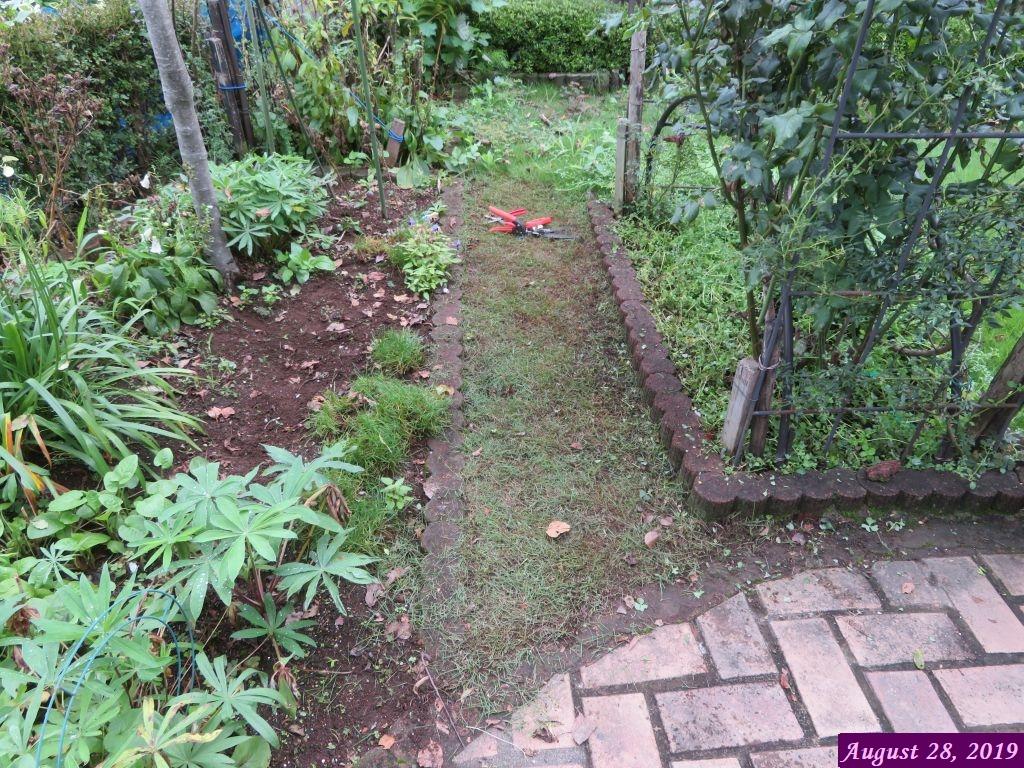画像3(草刈りをした芝生)