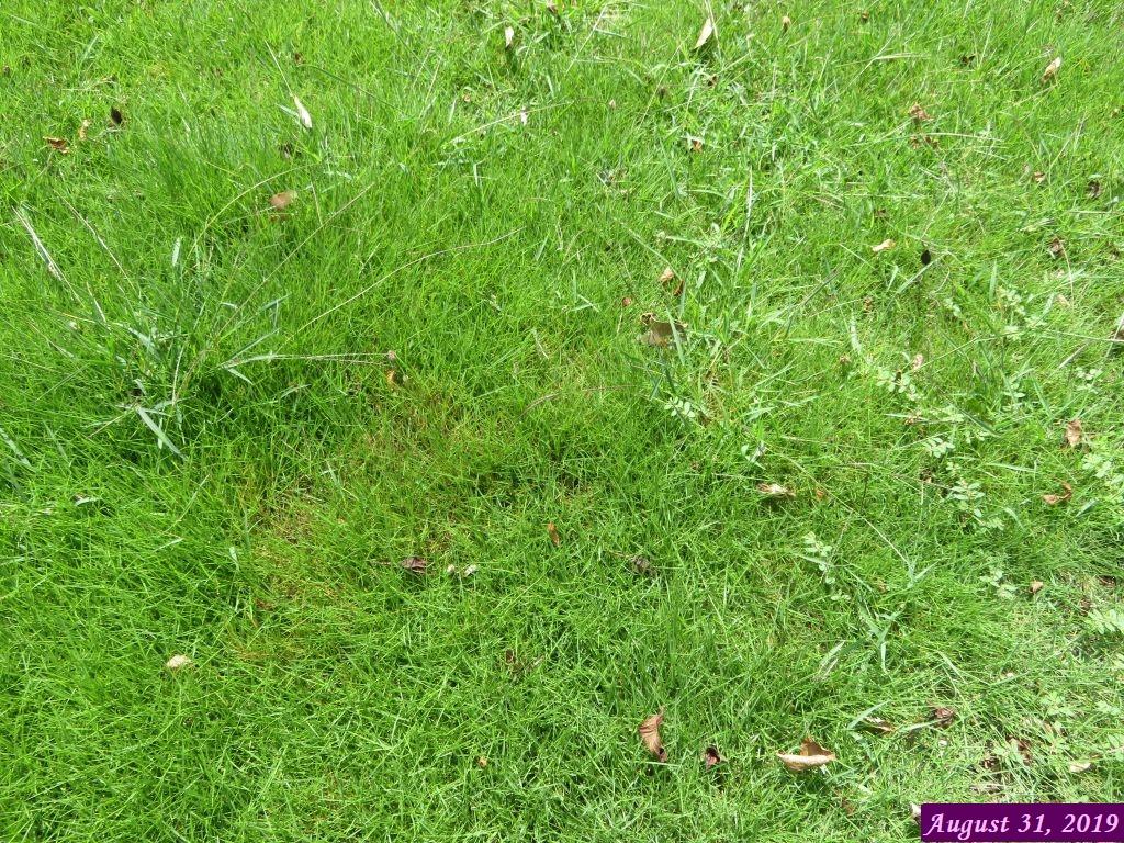 画像6(芝生の雑草)