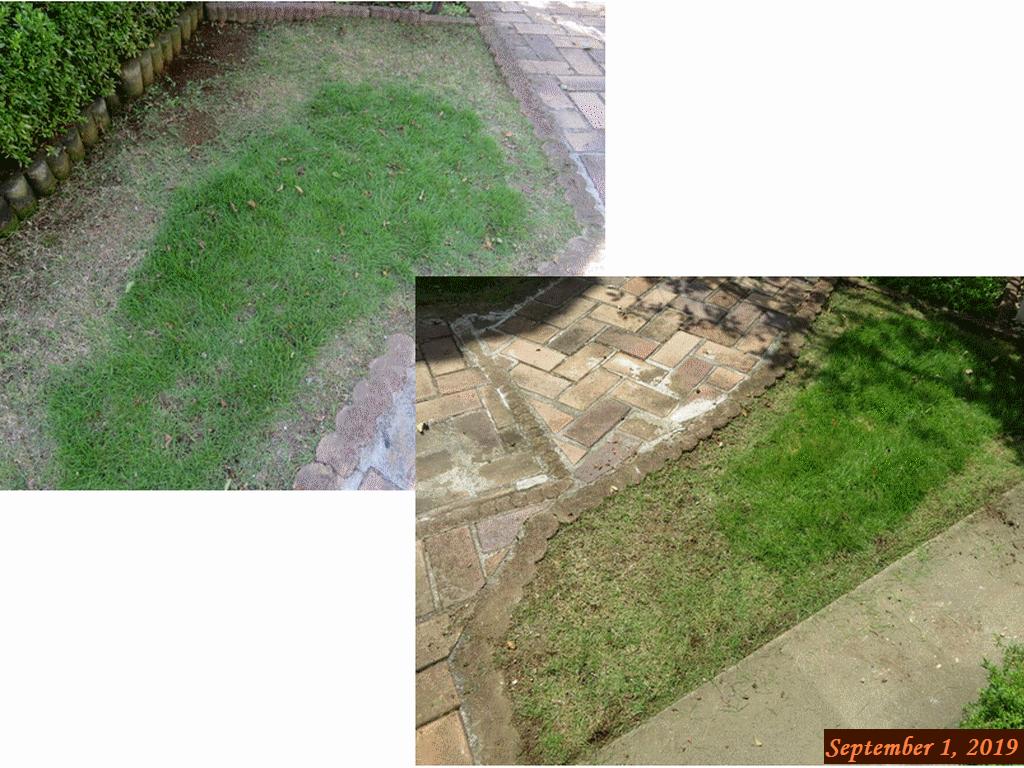 画像8(芝生の草取り&際刈り)