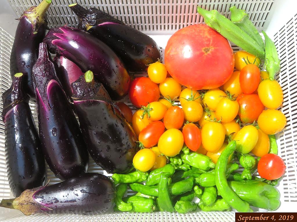 画像10(収穫したトマト、茄子、シシトウ等)
