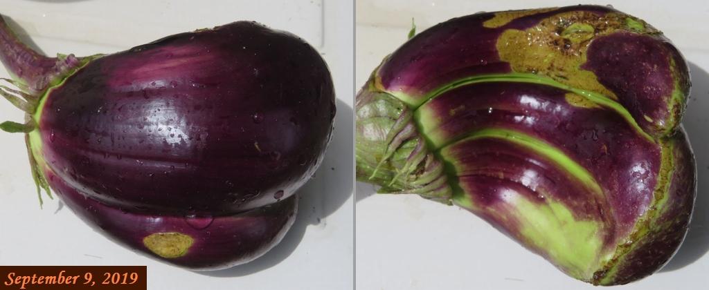 画像9(三つ子の茄子)