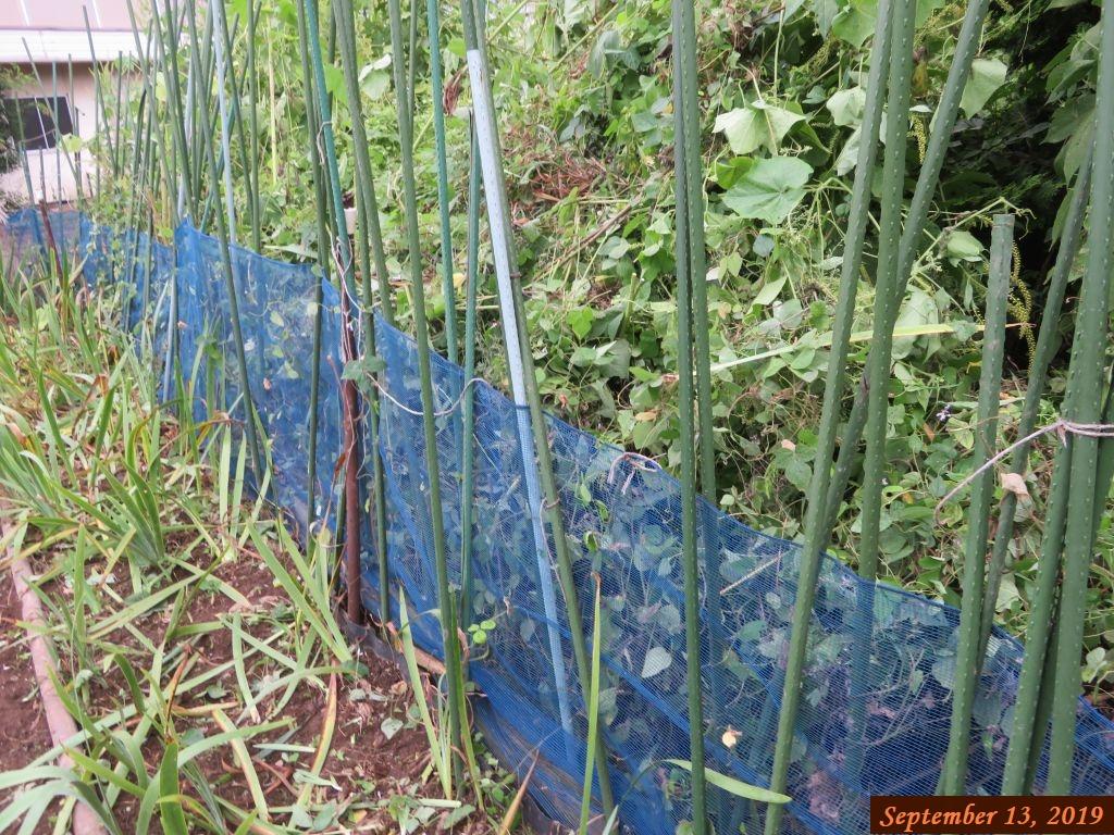 画像4(空き地から迫ってきた雑草の草取り)