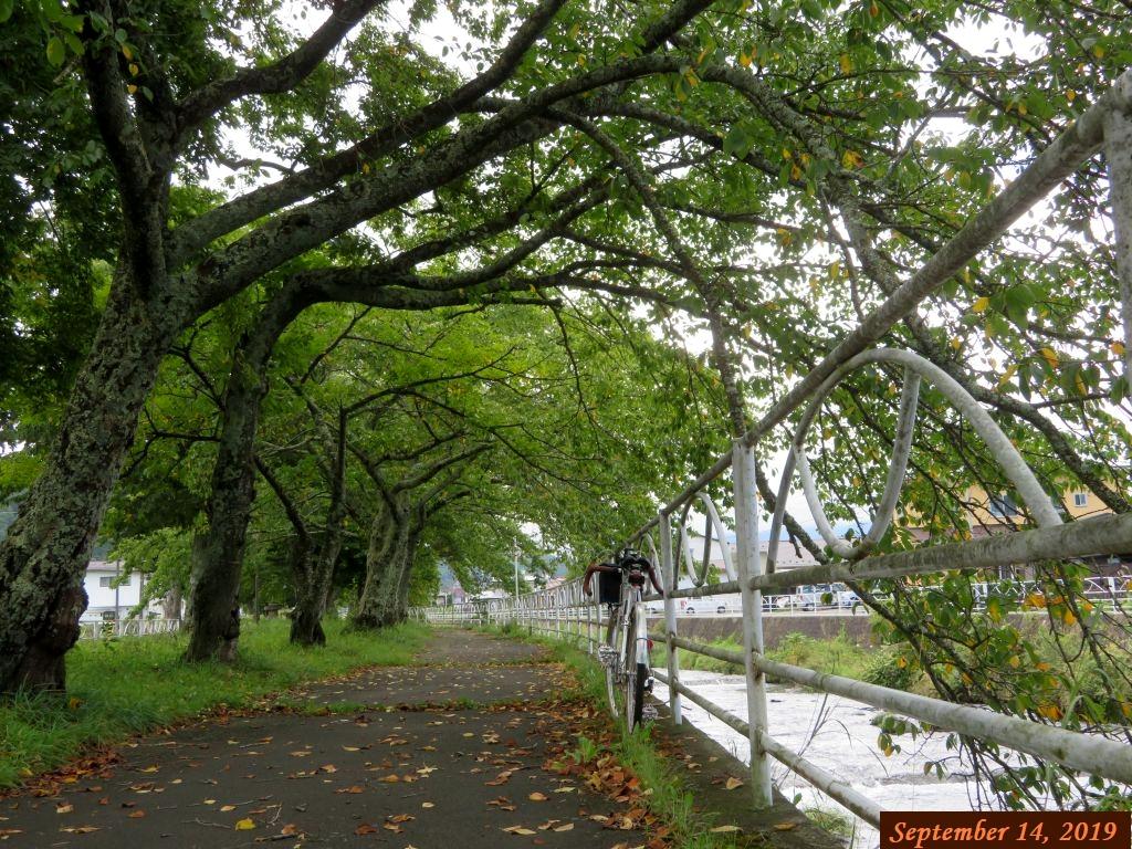 画像4(桂川河川公園)