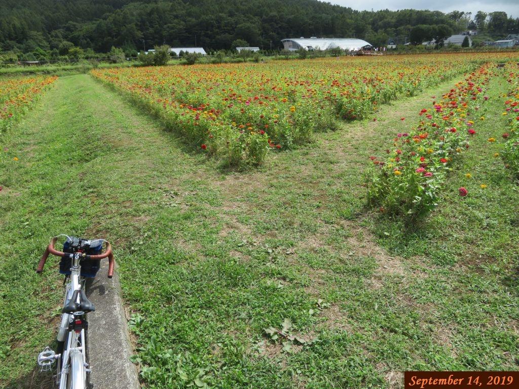 画像8(山中湖花の都公園)