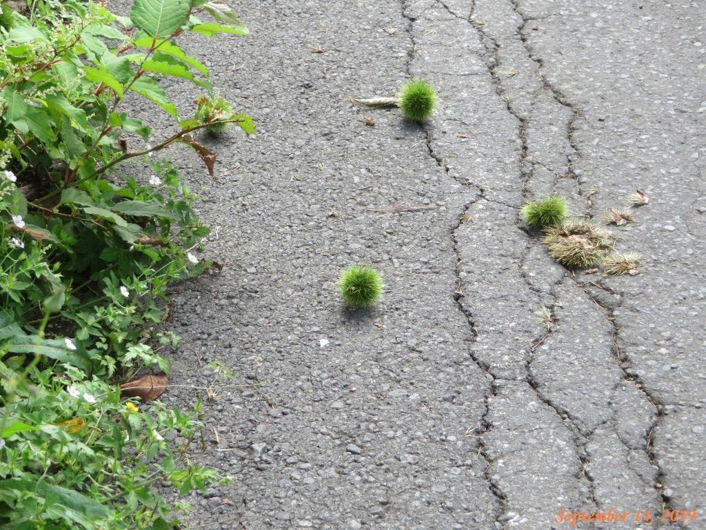 画像13(富士見公園付近の道路)