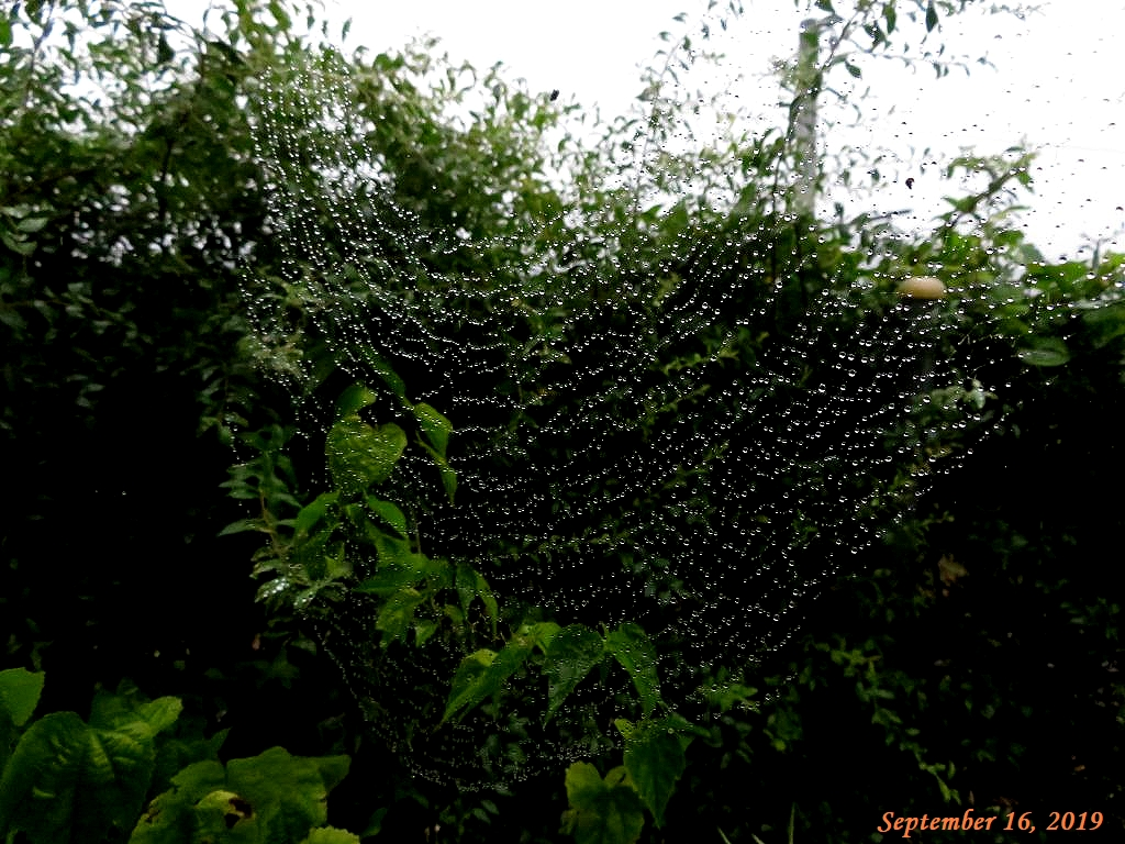 画像1(蜘蛛の巣の水滴)