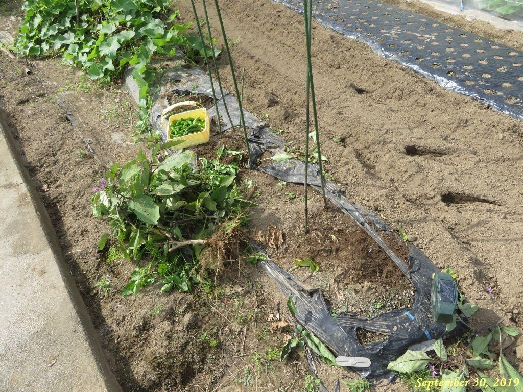 画像2(残り苗の夏野菜撤収)