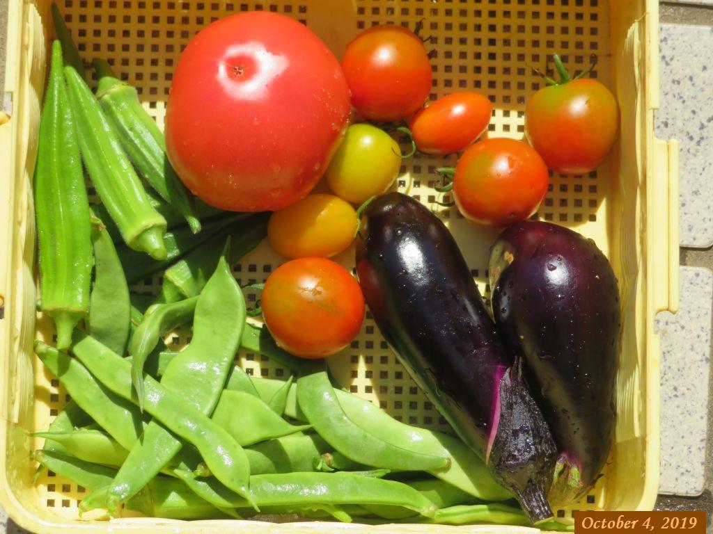 画像4(収穫野菜)