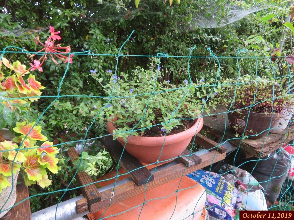 画像10(ネットを掛けた植木鉢)