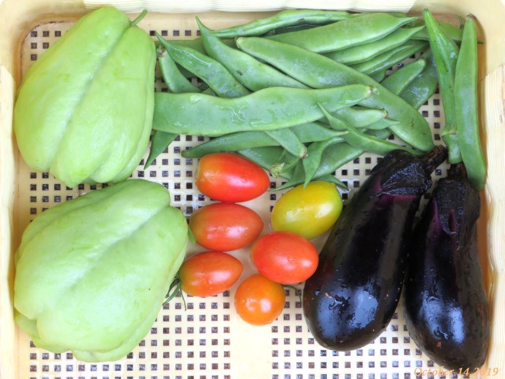 画像10(収穫した野菜)