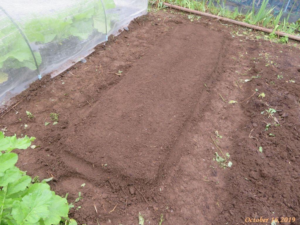 画像3(水菜と春菊の播種)