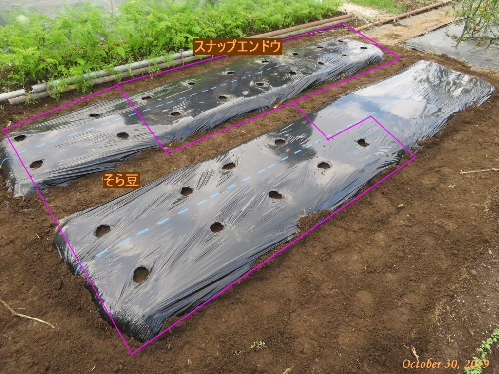 画像12(スナップエンドウとそら豆の種まき)