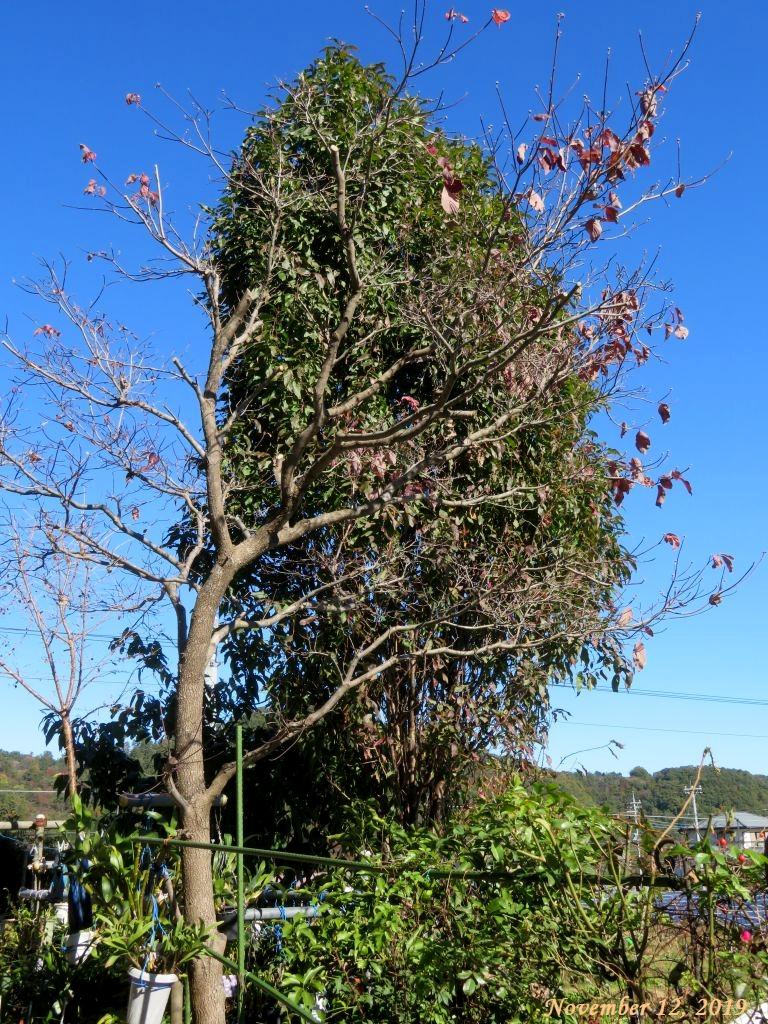 画像3(ハナミズキと花桃の木)