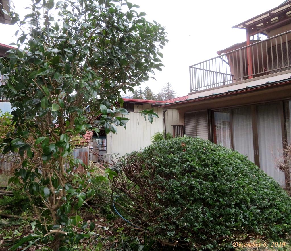 画像2(剪定後の庭木)