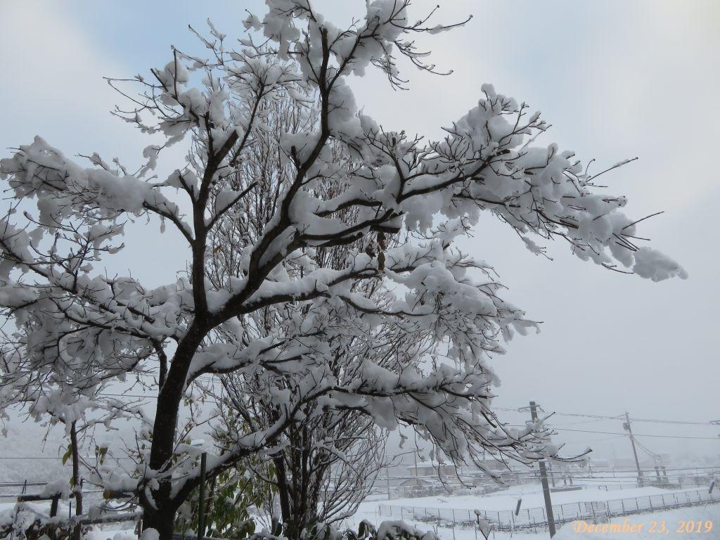 画像2(積雪16cm)