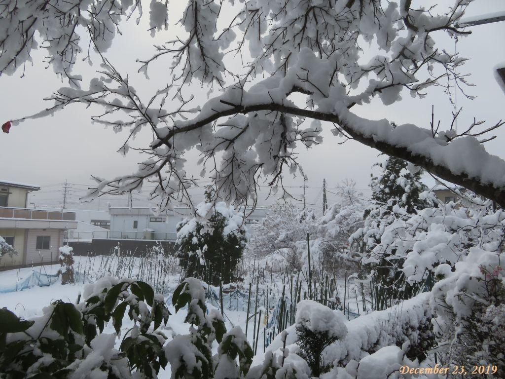 画像3(積雪16cm)