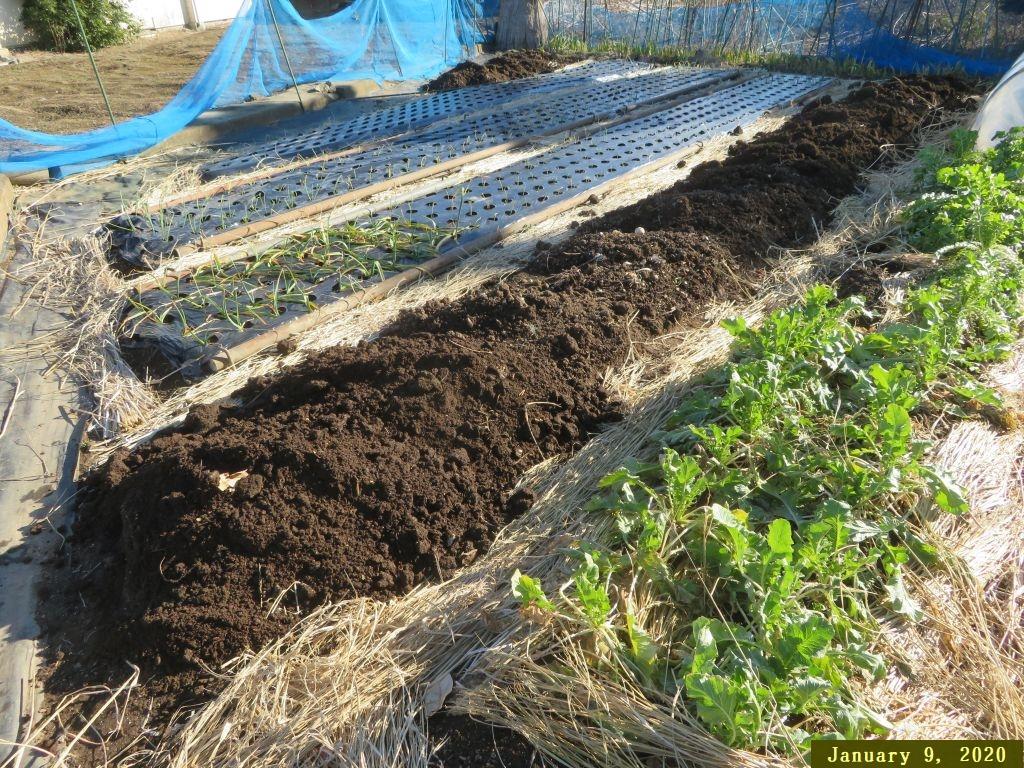 画像10(堆肥を入れた畑)