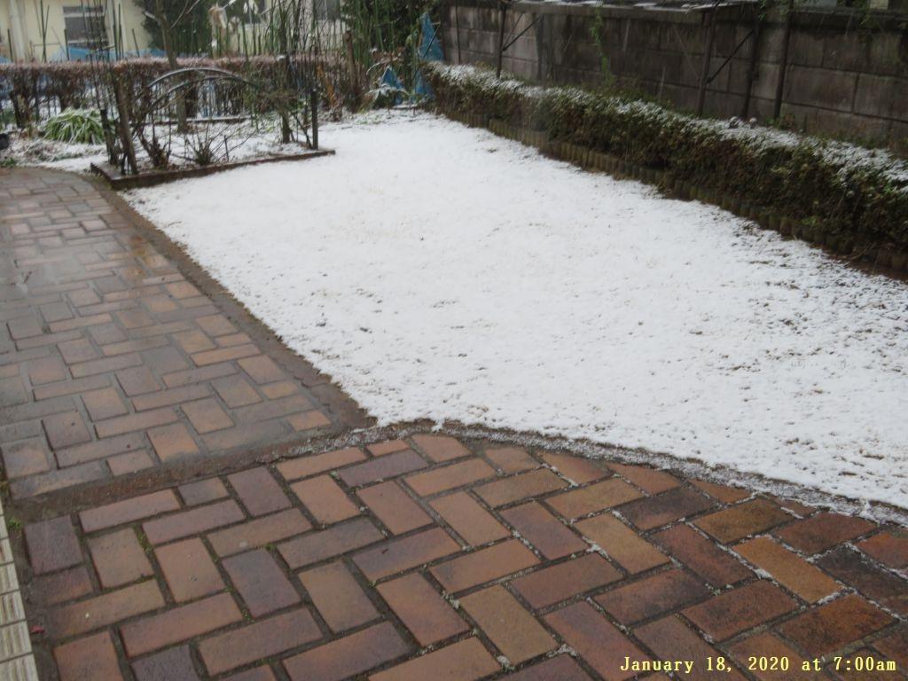 画像1(午前7時の雪)
