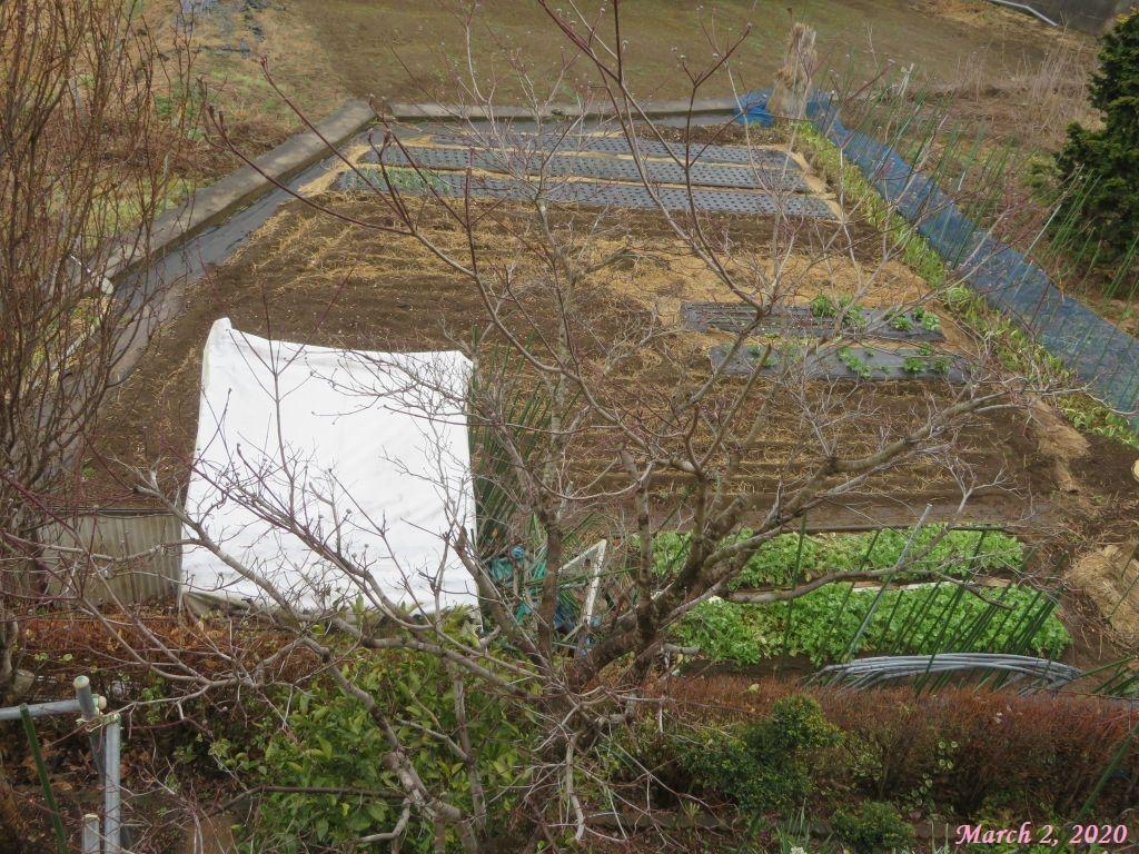 画像9(2階から見た畑)