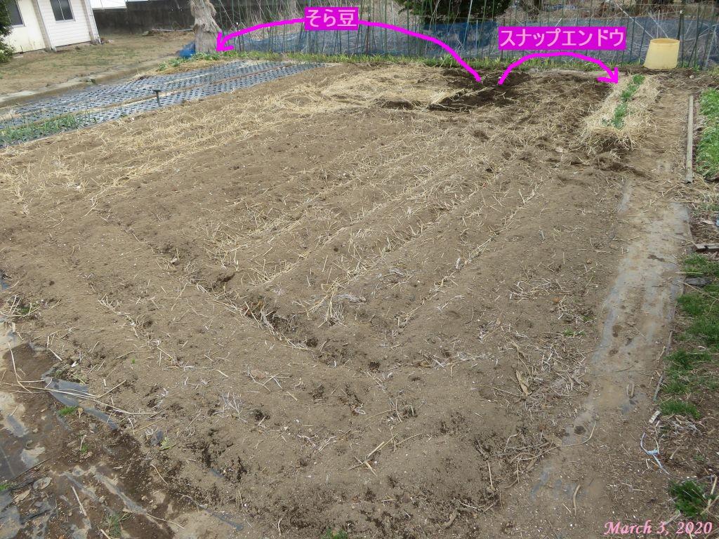 画像7(畑全景)