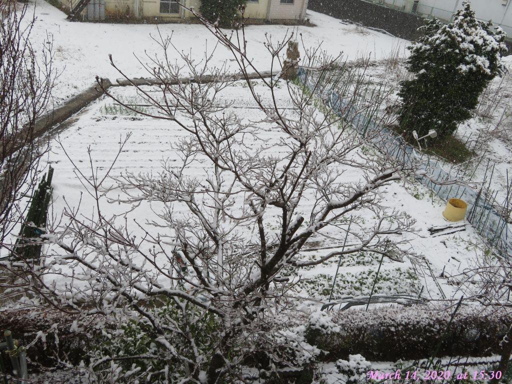 画像7(雪)