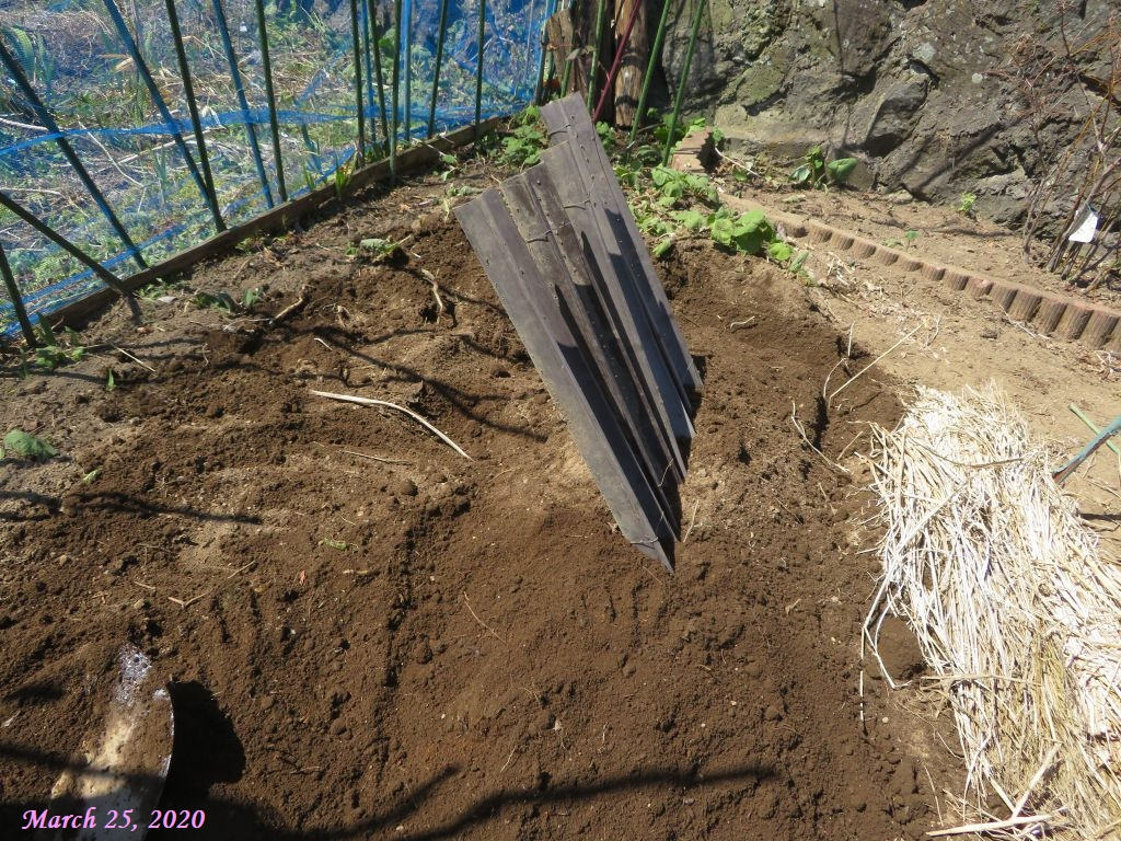 画像2(山芋の植え付け場所)