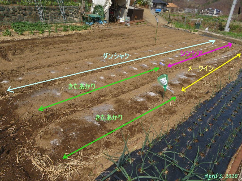画像4(種芋の植え付け)